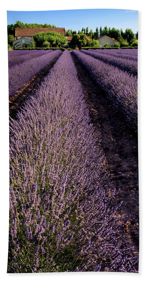 Lavender Bath Sheet featuring the photograph Lavender Field Provence France by Dave Mills