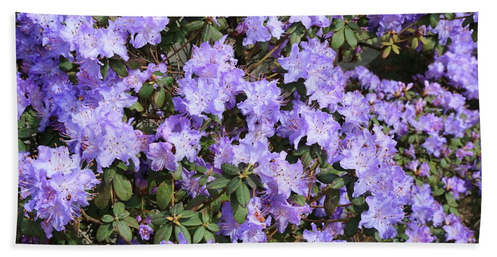 Rhododendron Hand Towel featuring the photograph Lavender Rhododendrons by Carol Groenen