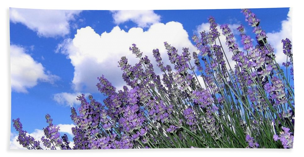 Lavender Hand Towel featuring the photograph Lavender by Will Borden