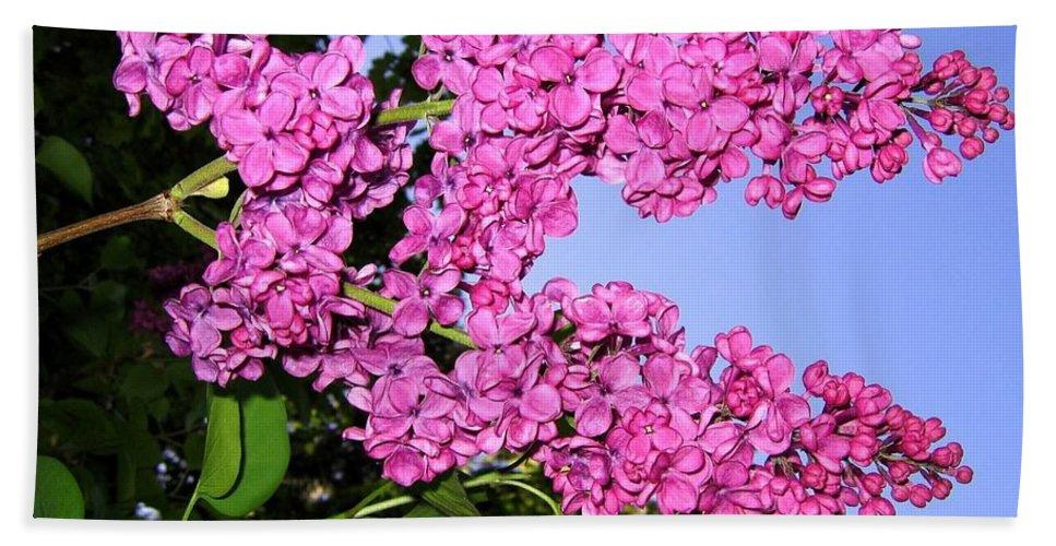 Lilacs Bath Sheet featuring the photograph Lavish Lilacs by Will Borden