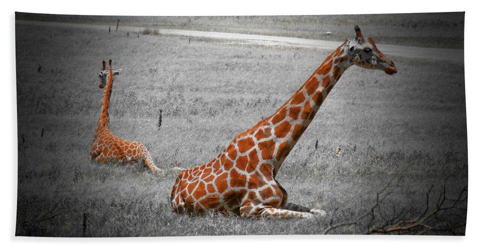 Giraffes Bath Sheet featuring the photograph Lazing In The Sun by Douglas Barnard