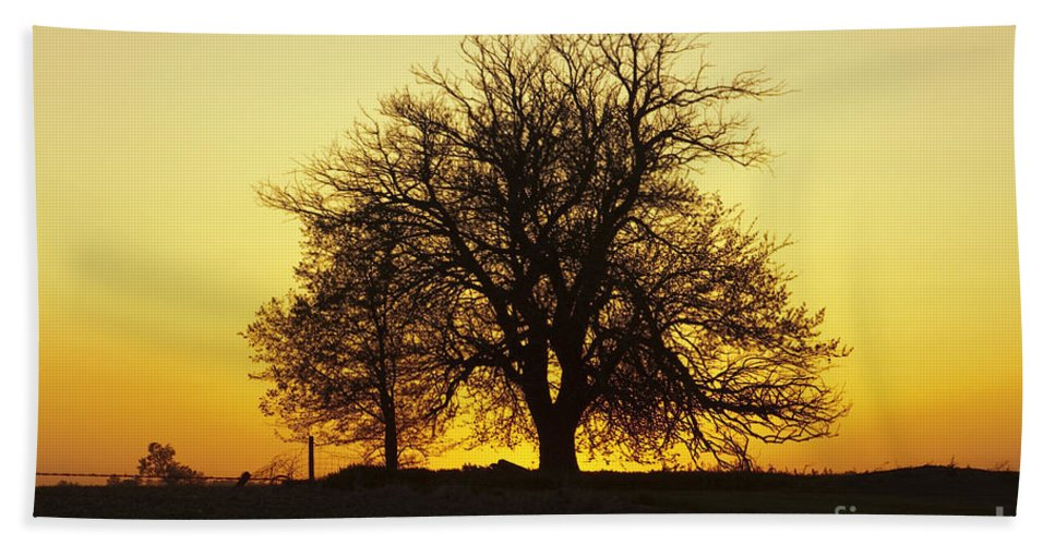 Leafless Hand Towel featuring the photograph Leafless Tree Against Sunset Sky by Sharon Foelz