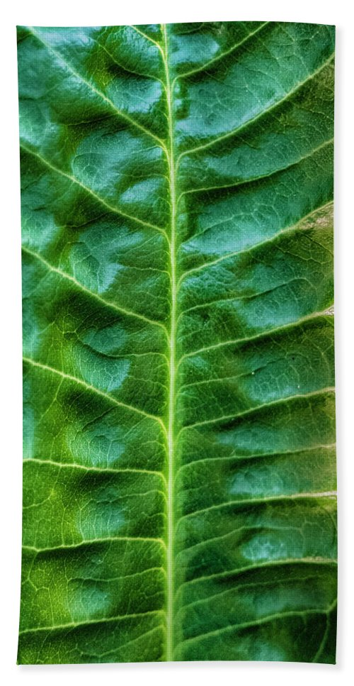 Leaves. Green Bath Sheet featuring the photograph Leather Leaf by Minnetta Heidbrink