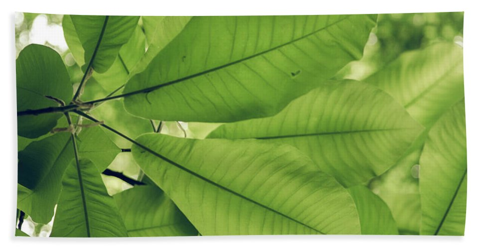 Photography Hand Towel featuring the photograph Leaves by Michelle Maney
