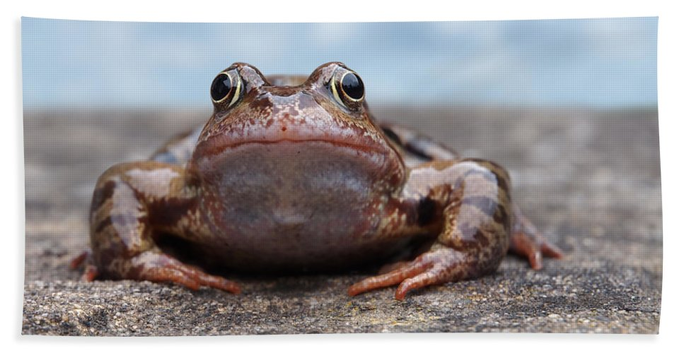 Frog Hand Towel featuring the photograph Leaving Home by Gill Billington