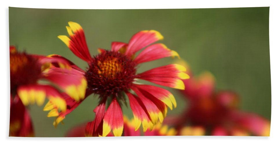 Coneflower Bath Towel featuring the photograph Lemon Yellow and Candy Apple Red Coneflower by Colleen Cornelius
