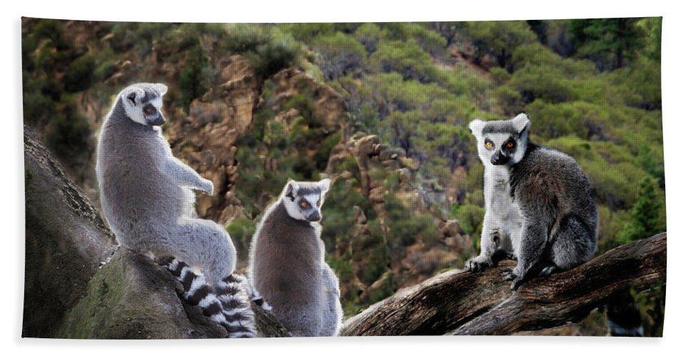 Nature Photography Bath Sheet featuring the photograph Lemur Family by Melinda Hughes-Berland