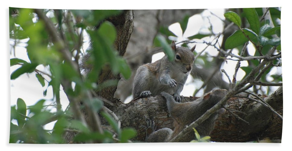 Squirrel Bath Towel featuring the photograph Lending A Helping Hand by Rob Hans