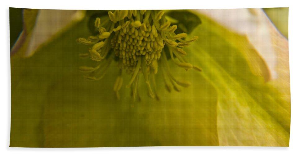 Flower Bath Sheet featuring the photograph Lenten Rose Interior by Teresa Mucha