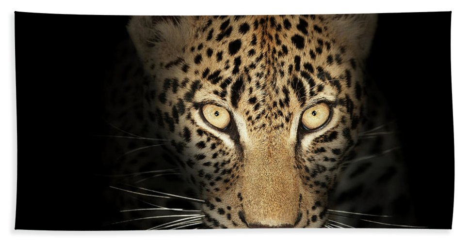 Leopard Bath Towel featuring the photograph Leopard In The Dark by Johan Swanepoel
