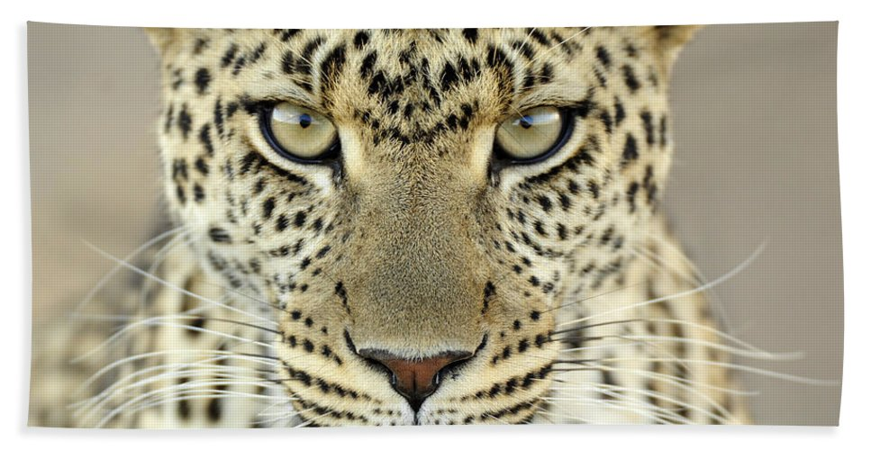 Fn Hand Towel featuring the photograph Leopard Panthera Pardus Female by Martin Van Lokven