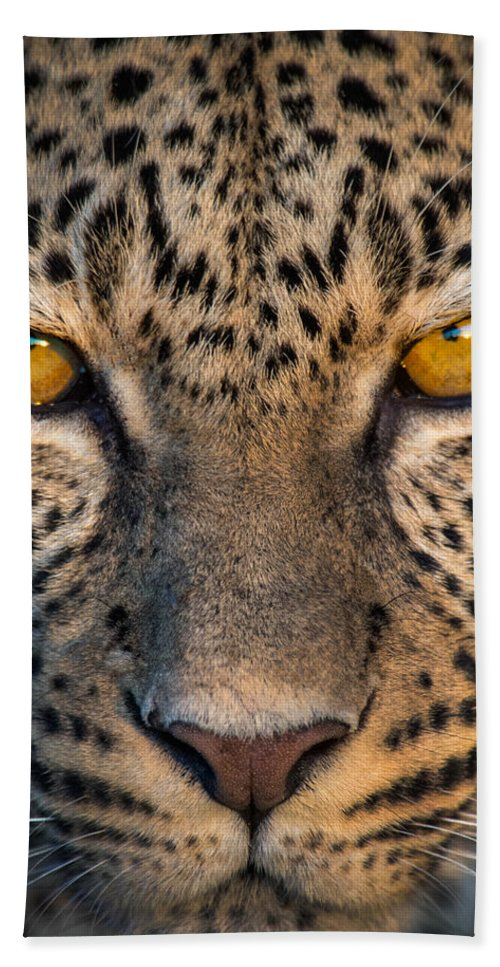 Photography Bath Sheet featuring the photograph Leopard Panthera Pardus, Ndutu by Panoramic Images