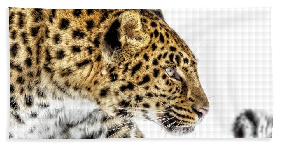 Leopard Profile Hand Towel featuring the photograph Leopard Profile by Wes and Dotty Weber