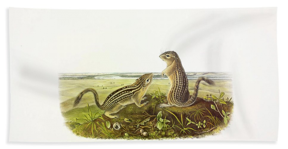 Thirteen-lined Ground Squirrel Bath Towel featuring the painting Leopard-spermophile by John James Audubon