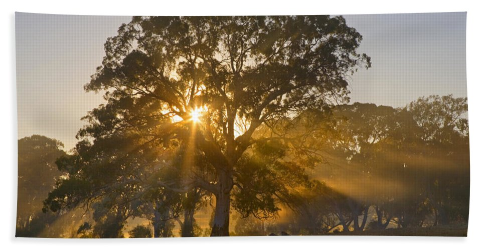 Tree Bath Towel featuring the photograph Let There Be Light by Mike Dawson