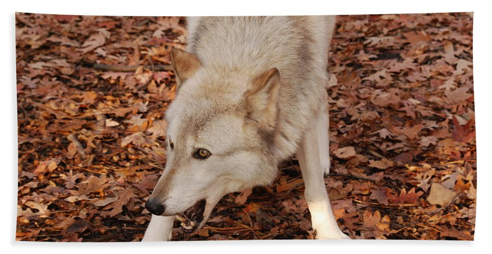 Wolf Hand Towel featuring the photograph Lets Play by Lori Tambakis