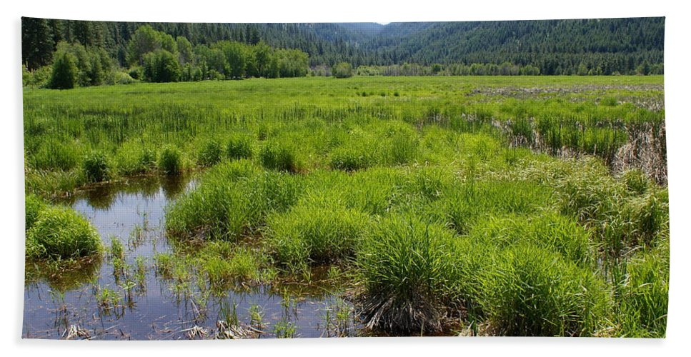 Nature Hand Towel featuring the photograph Liberty Marsh by Ben Upham III