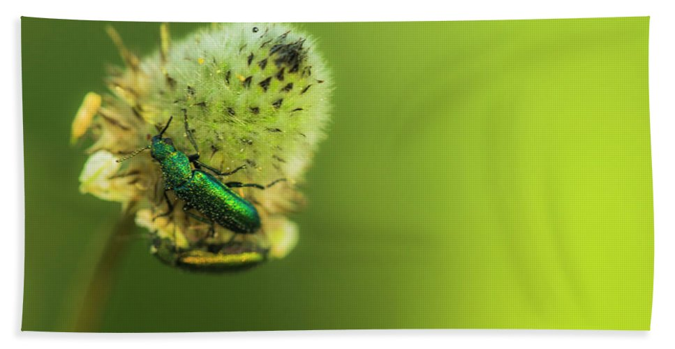 Flower Bath Sheet featuring the photograph Life In The Meadow by Ignacio Leal Orozco