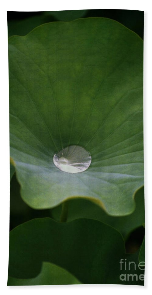 Plant Bath Sheet featuring the photograph Life by Richard Rizzo