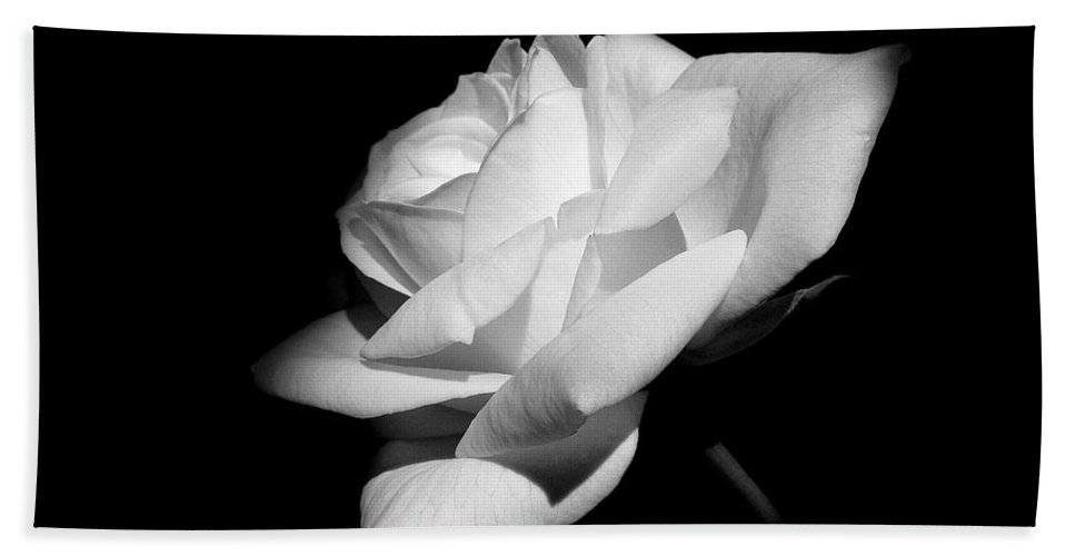 Rose Hand Towel featuring the photograph Light On Rose Black And White by Jennie Marie Schell