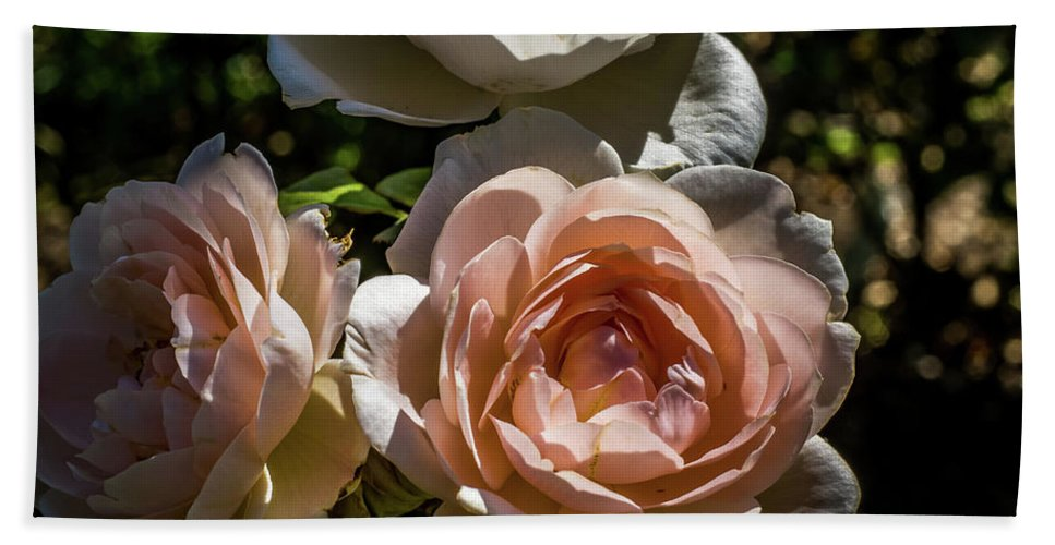 Natural Hand Towel featuring the photograph Light Pink Roses by Howard Roberts