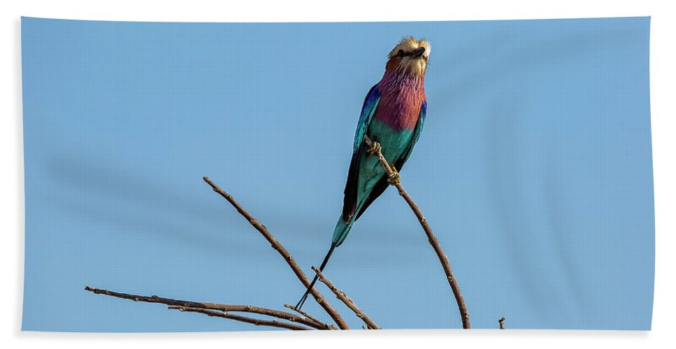 Lilac Breasted Roller Bath Sheet featuring the photograph Lilac Breasted Roller 5 by Kay Brewer
