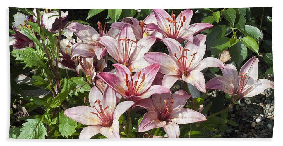Lily Hand Towel featuring the photograph Lilies In Pink by Sandra Foster
