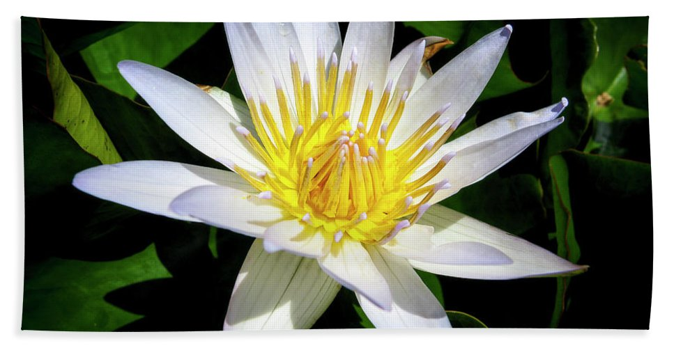 Flowers Bath Sheet featuring the photograph Lily by Daniel Murphy