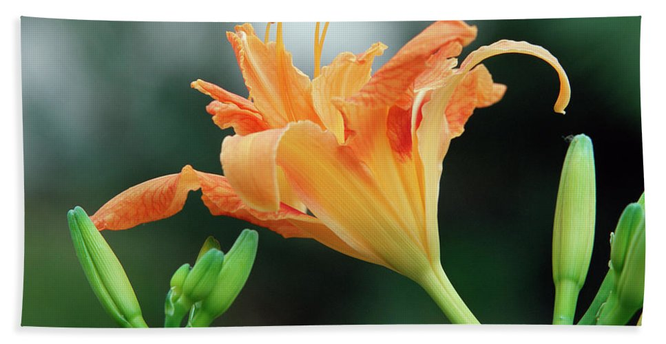 Lily Hand Towel featuring the photograph Lily by Jim Benest