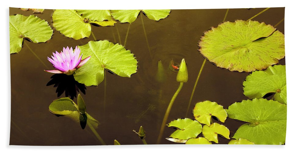 Lily Pad Bath Sheet featuring the photograph Lily Pads 1 by Madeline Ellis