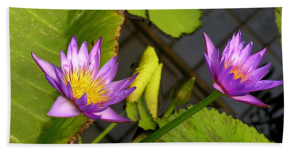 Purple Bath Sheet featuring the photograph Lily Pond by Karen Dickinson