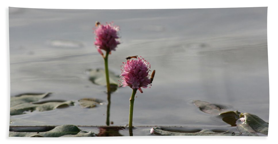 Wasp Lilypads Water Lake Plants Nature Wild Bugs Pink Flower Hand Towel featuring the photograph Lilypads And Wasps by Andrea Lawrence