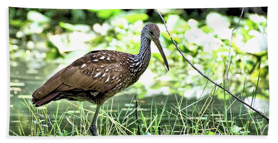 Animal Hand Towel featuring the photograph Limpkin 2 by John Trommer