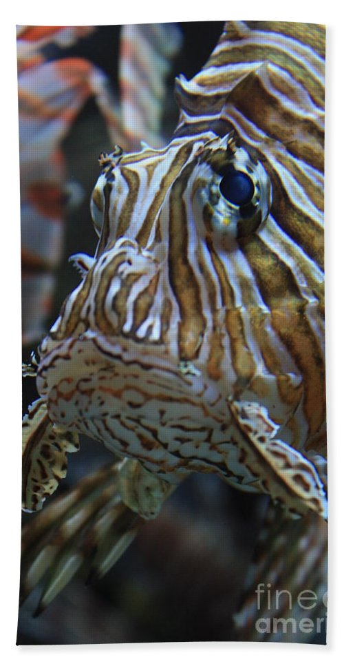 Fish Bath Sheet featuring the photograph Lion Fish Profile by Carol Groenen