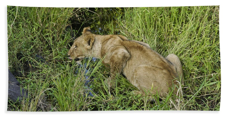 Africa Hand Towel featuring the photograph Lion In A Cool Glade by Michele Burgess
