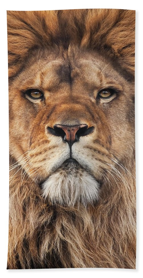 Lion Hand Towel featuring the photograph Lion by Steve Mackay