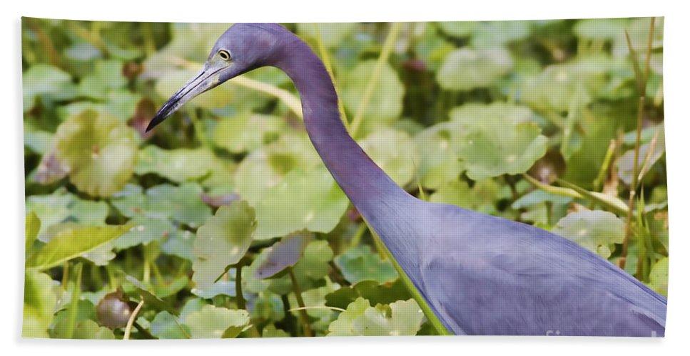 Little Blue Heron Hand Towel featuring the photograph Little Blue At De Leon Springs by Deborah Benoit