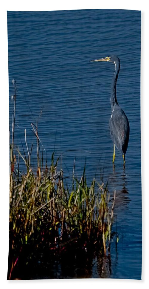Heron Bath Sheet featuring the photograph Little Blue Heron by DigiArt Diaries by Vicky B Fuller