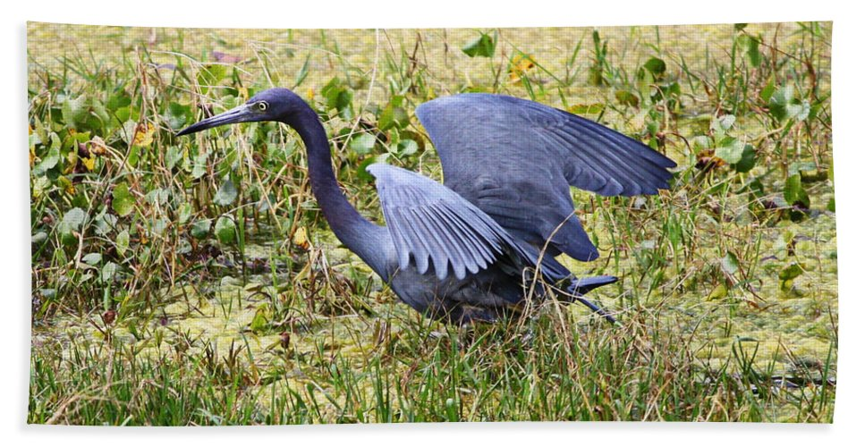 Little Blue Heron Hand Towel featuring the photograph Little Blue Heron Walking In The Swamp by Carol Groenen