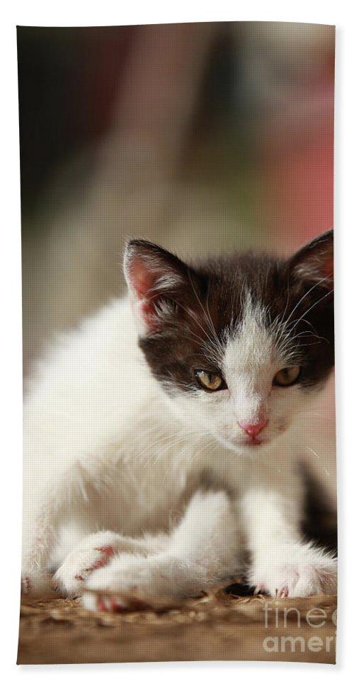 Cat Bath Towel featuring the photograph Little cute kitten by Jana Behr