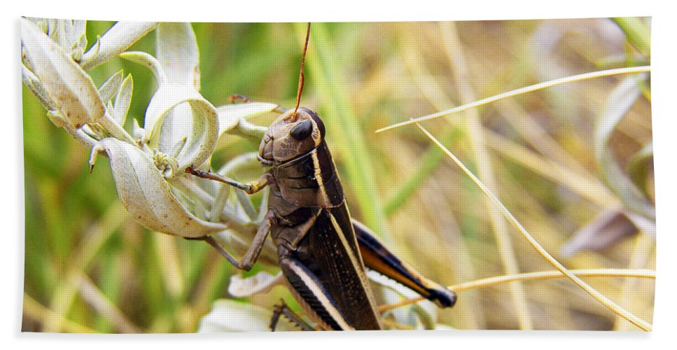 Grasshopper Bath Sheet featuring the photograph Little Grasshopper 2 by Marilyn Hunt
