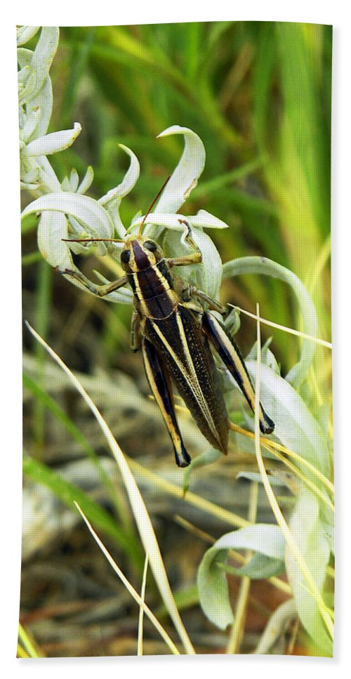 Grasshopper Hand Towel featuring the photograph Little Grasshopper by Marilyn Hunt