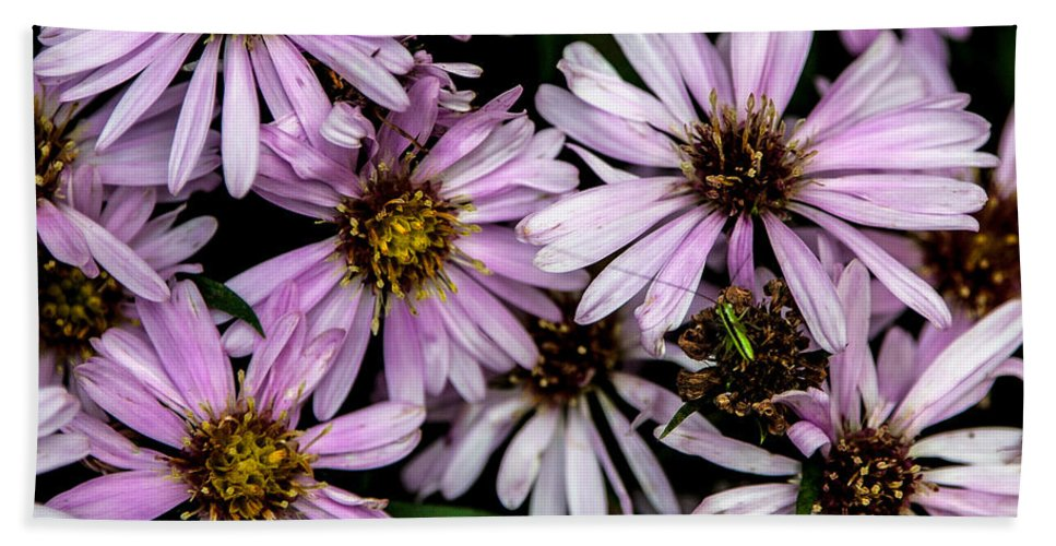 Flower Hand Towel featuring the photograph Little Green Bug Among The Flowers by John Haldane