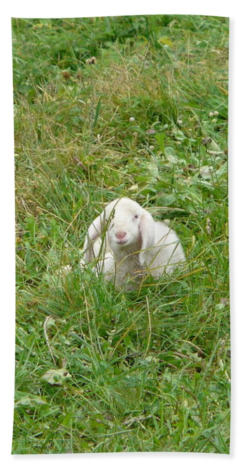 Lamb Hand Towel featuring the photograph Little Lamb by Valerie Ornstein