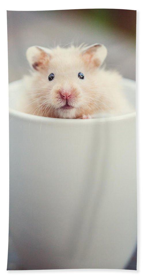 Animal Bath Sheet featuring the photograph Little Sebastian by Lisa Russo