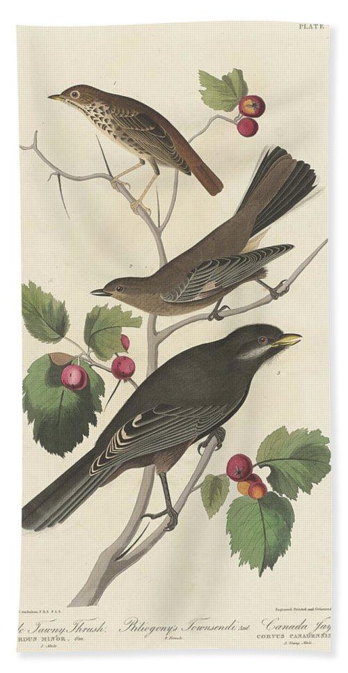 John James Audubon Hand Towel featuring the painting Little Tawny Thrush by John James Audubon