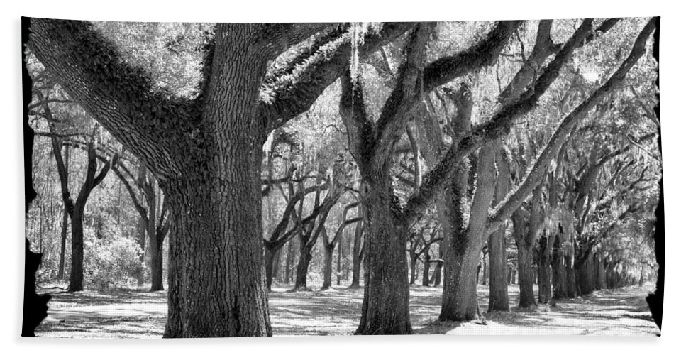 Live Oaks Bath Sheet featuring the photograph Live Oak Giants - Black And White Framing by Carol Groenen