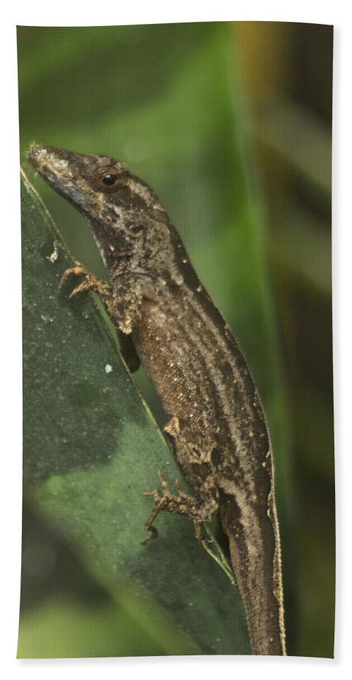 Wildlife Hand Towel featuring the photograph Lizard 3 by Michael Peychich