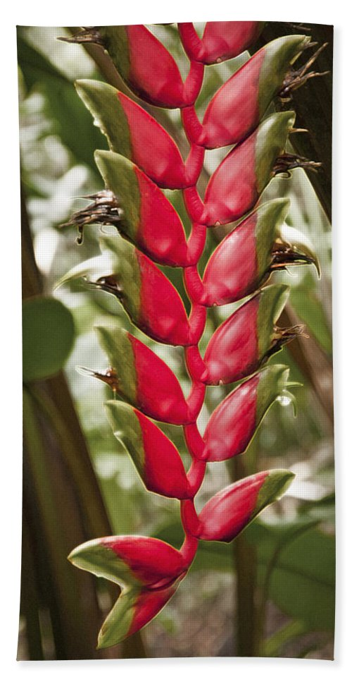 Heliconia Rostrata Hand Towel featuring the photograph Lobster Claw by Steven Sparks