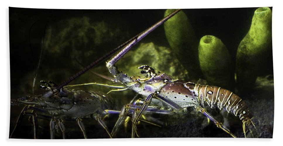 Lobster Bath Towel featuring the photograph Lobster In Love by Marilyn Hunt